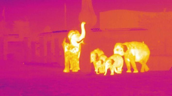 Tecnologia infravermelho ajuda a caça ilegal de animais selvagens
