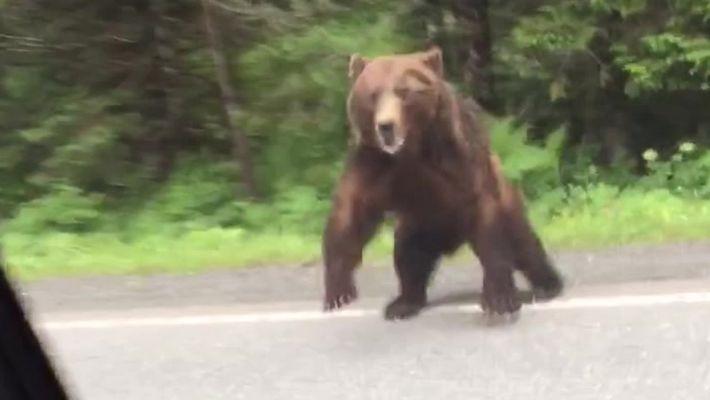 Urso ataca carro em Yakutat,  Alasca