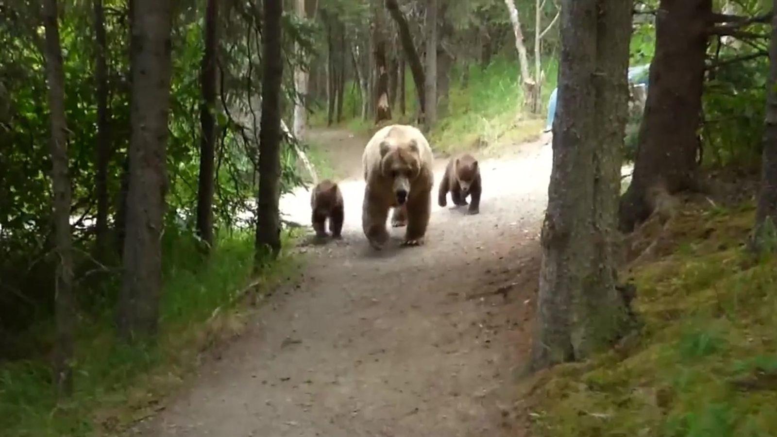 Turista é surpreendido por mãe urso e filhotes enquanto fazia trilha