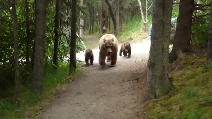 Urso e filhotes são flagrados em trilha