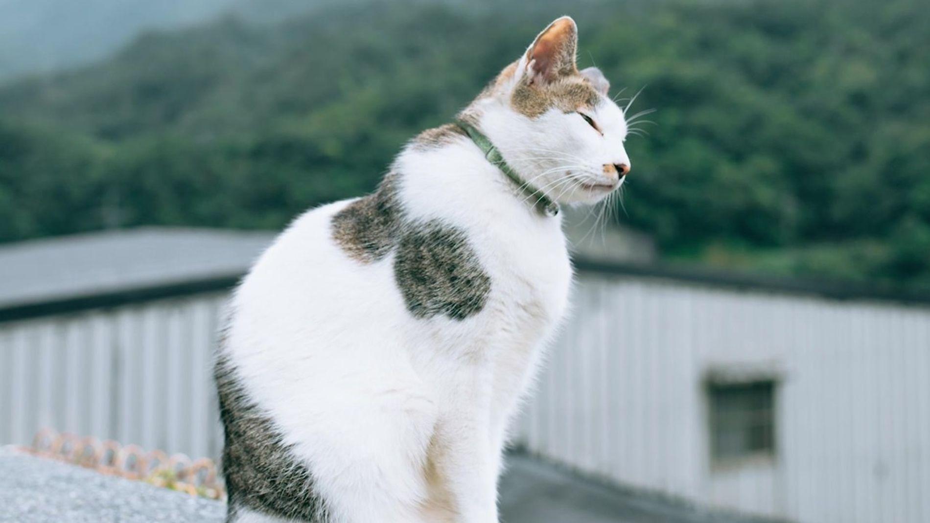 Conheça esta vila de gatos em Taiwan