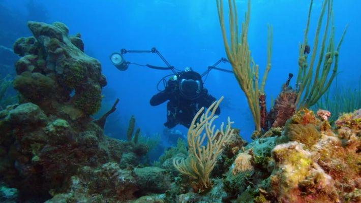 Tesouro Submarino: Oceano Ameaçado
