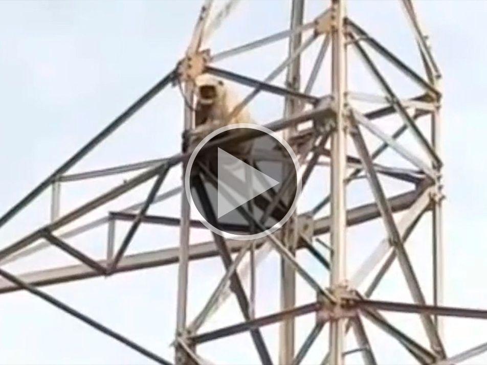 Assista a um macaco desafiar as leis da física com um super salto