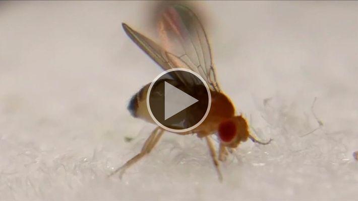 Fungo destruidor de insetos transforma moscas em zumbis