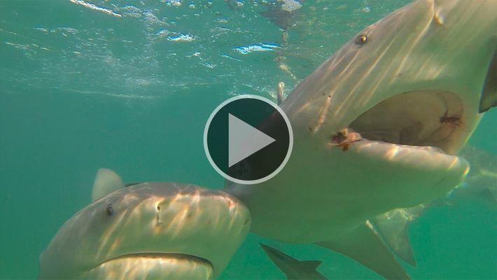 Quer manter os tubarões longe? Usar imãs é uma boa opção