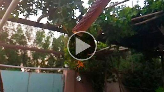 Assista a uma vespa coletando água em câmera lenta