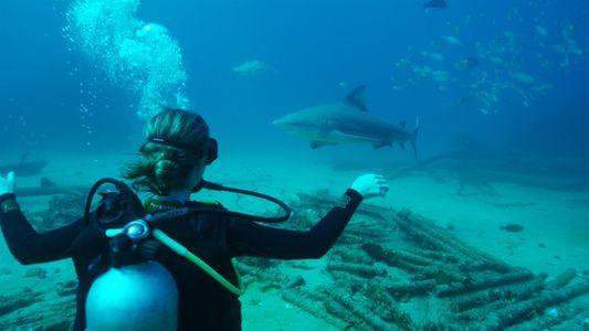 Mergulhando por um planeta que vale a pena proteger