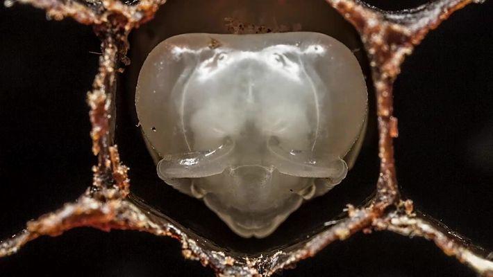 Timelapse de uma colmeia de abelhas