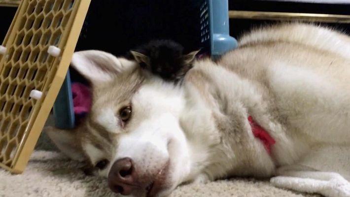 Amizades Insólitas: Top 5 - Cachorros e Seus Amigos