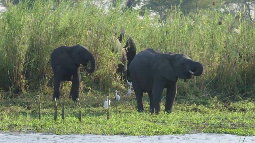 Como realocar 520 elefantes entre reservas