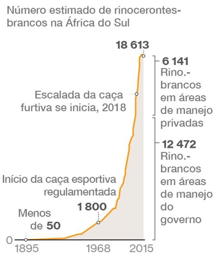 A ascensão dos rinocerontes-brancos