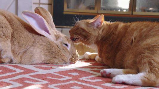 Amizades Insólitas: Top 5 - felinos e seus amigos