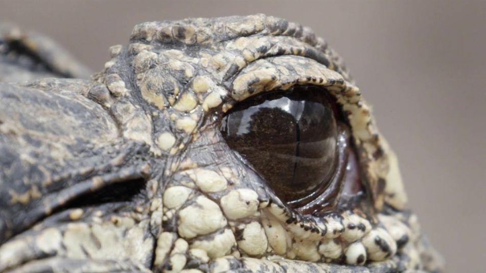 Indomável com Filipe DeAndrade: Crocodilos e Jacarés