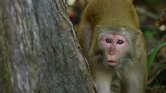 Indomável com Filipe DeAndrade: Macacos