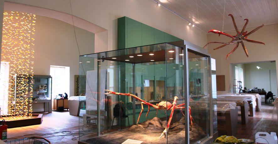 Este caranguejo-gigante empalhado integrava sala de artrópodes do Museu Nacional.