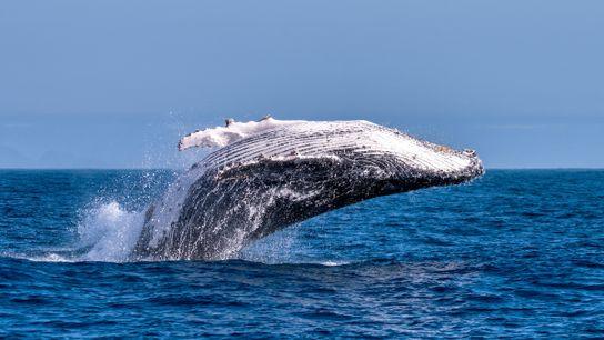 salto-das-baleias-jubartes-espirito-santo