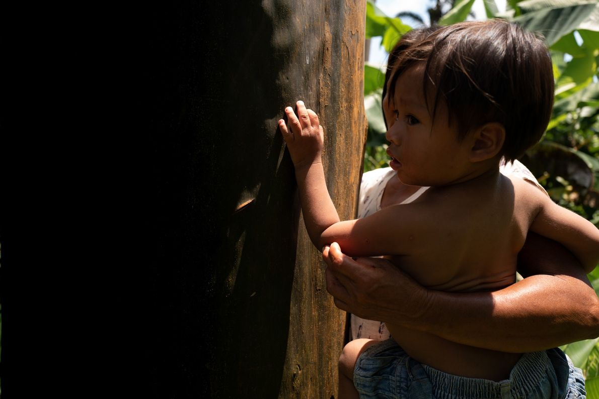 Uma criança wampís junto a um exemplar de capirona.