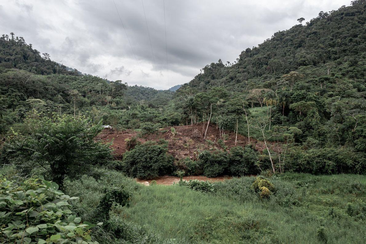 Fora do território wampís, mas dentro da Amazônia peruana, pode-se avistar, da estrada, campos de corte ...