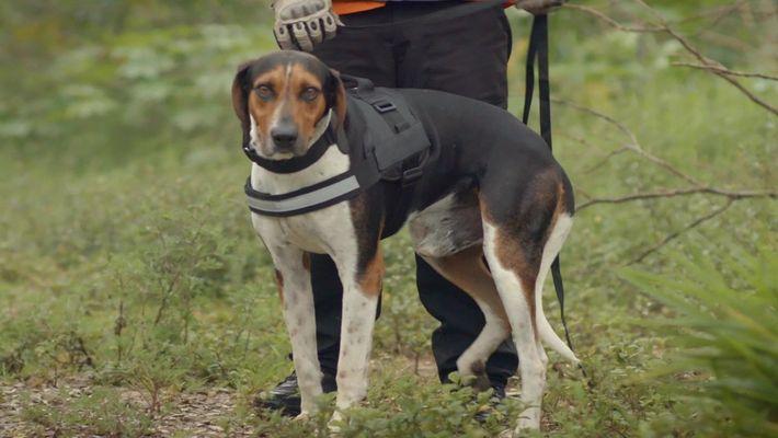 Radar Pet: Barão