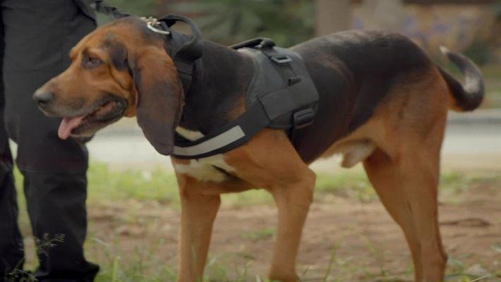 Radar Pet: Gugo