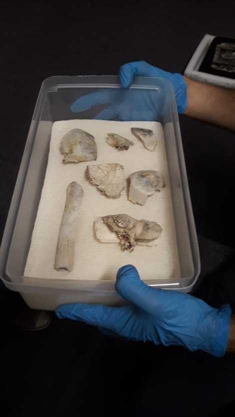 Cerca de 80% dos fragmentos encontrados dentro de uma caixa no Museu Nacional já foram identificados ...