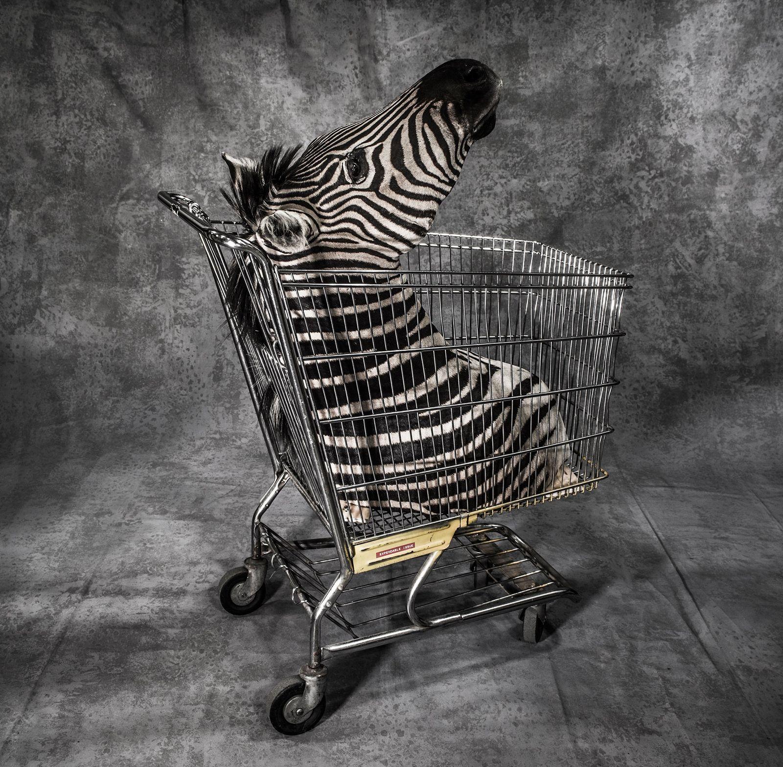 A zebra taxidermizada confiscada em aeroporto dos Estados Unidos é apenas um dos 1,5 milhão de ...