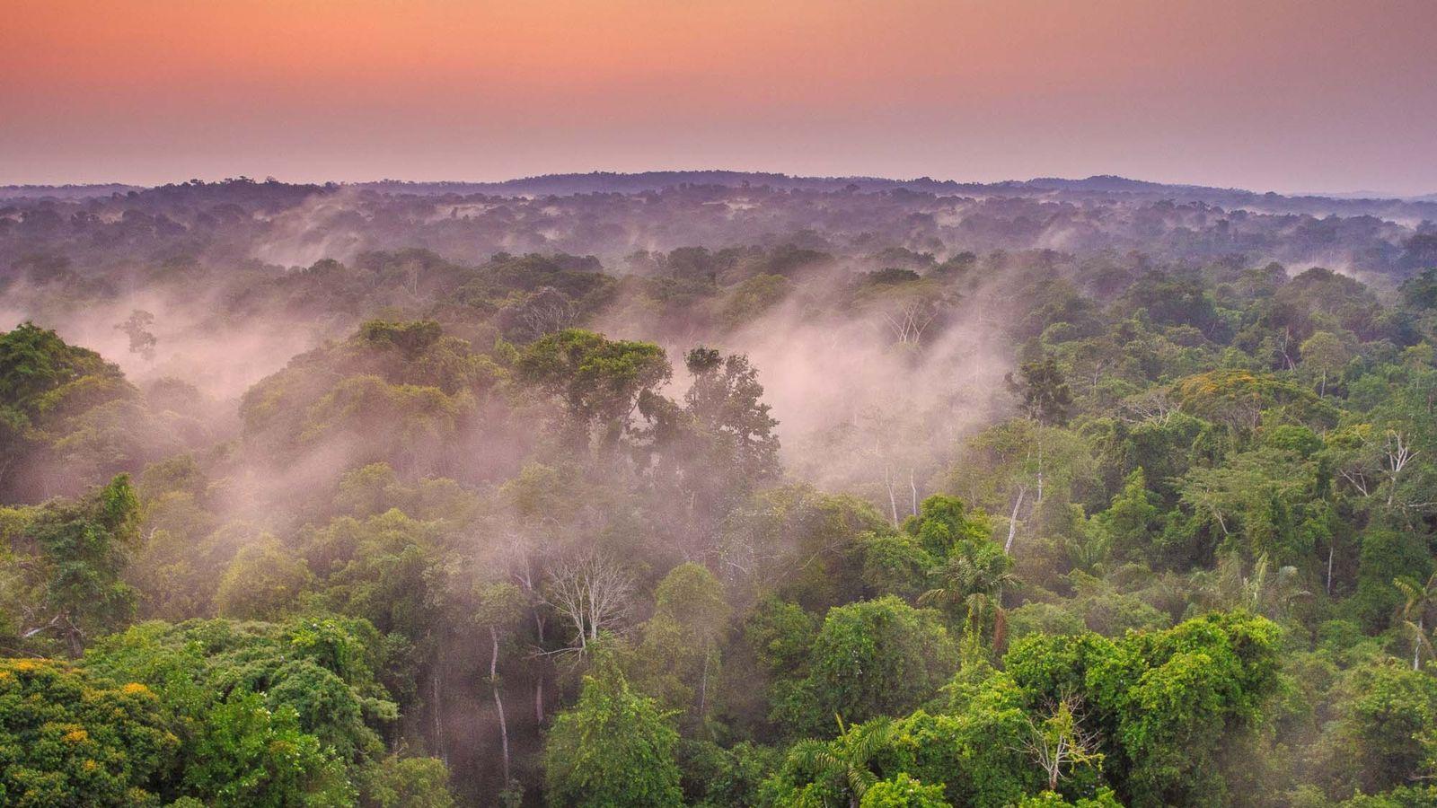 Brasil Selvagem | National Geographic