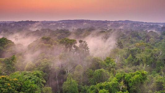 Brasil Selvagem - Biomas: Conheça a Amazônia