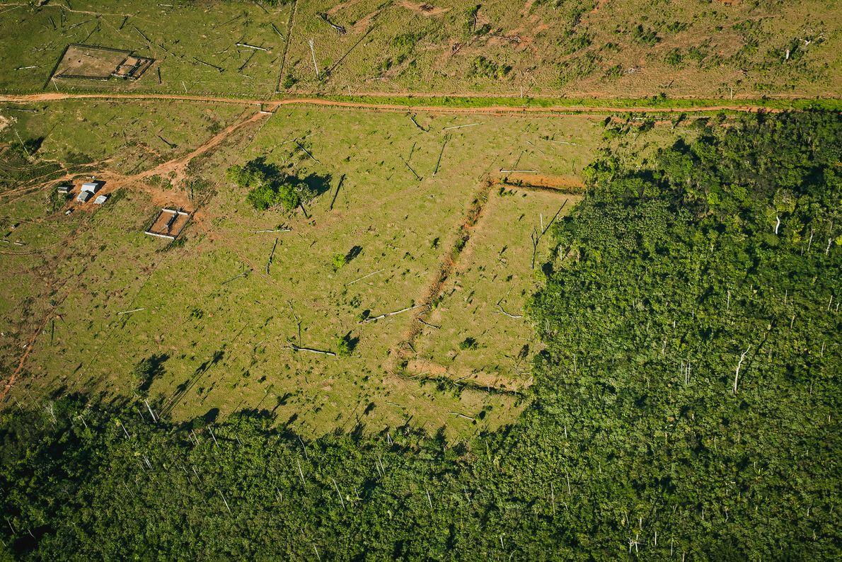 Sítio arqueológico JK, em Acrelândia (AC). Na imagem, é possível ver como o desmatamento da floresta possibilitou ...