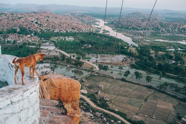 Um cão olha para a antiga vila de Hampi, Patrimônio Mundial da Unesco, no estado de ...