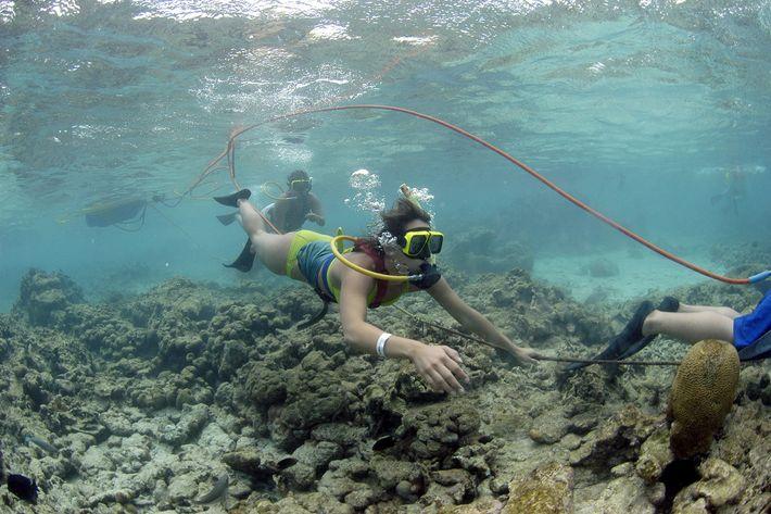 Snuba in Aruba