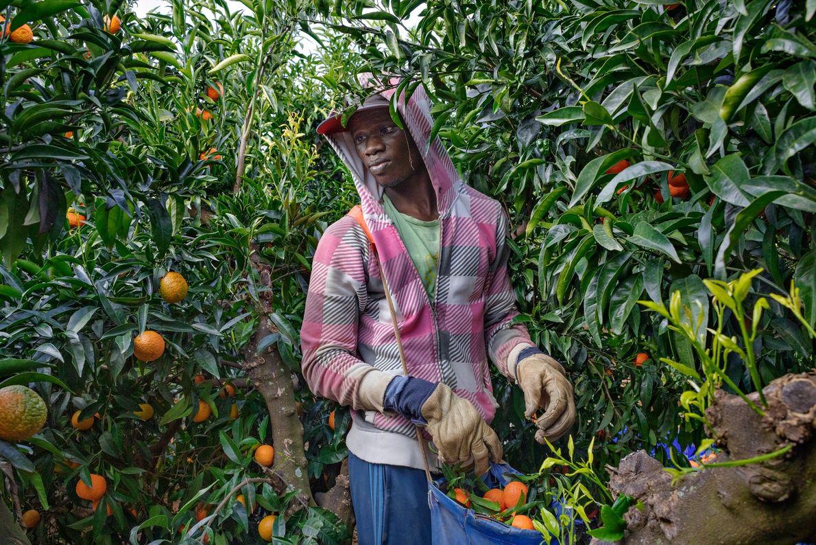 Depois de deixar o Senegal em 2016 rumo ao cinturão agrícola no sul da Espanha, Mbaye ...