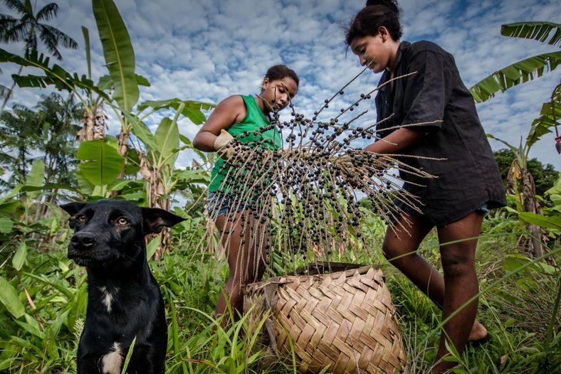 Com população de cerca de 80 famílias, a comunidade quilombola Arenheguaua fica a 54 quilômetros do ...