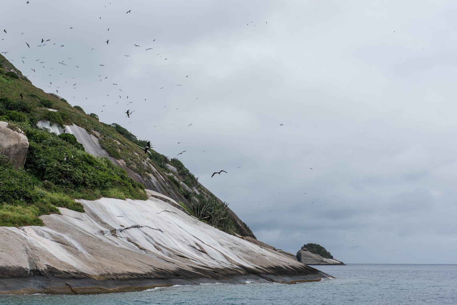 Apesar das cobras, as fragatas e albatrozes de Alcatrazes formam o maior ninhal de aves marinhas ...