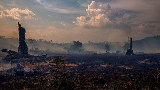 Área de floresta queimada no estado do Pará, Brasil, na bacia amazônica, em 27 de agosto ...