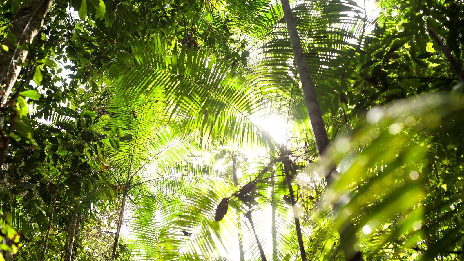 Um futuro mais quente para florestas como a Amazônia, mostrada na imagem, não significa necessariamente o ...