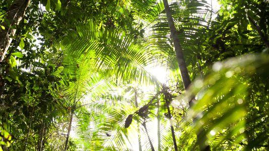 Florestas tropicais estão demostrando resistência surpreendente ao aumento das temperaturas