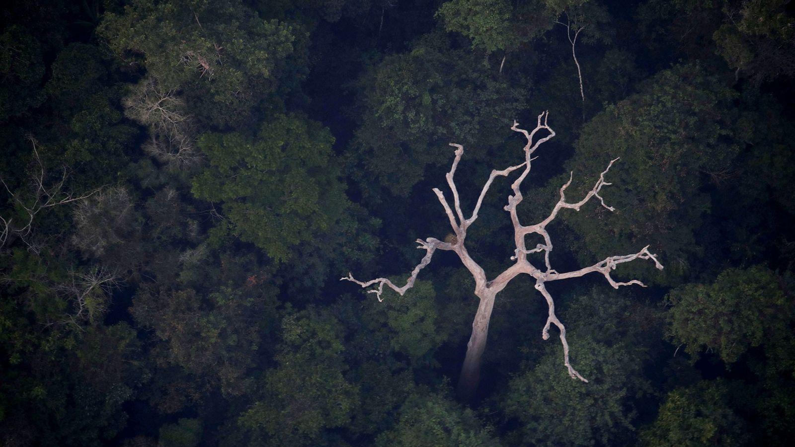 Vista aérea da Amazônia perto de Porto Velho, Rondônia, em 21 de agosto de 2019.