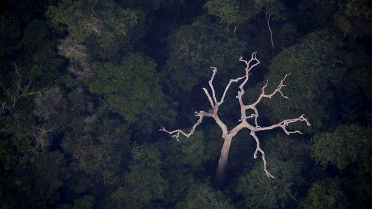 Amazônia não produz 20% do oxigênio do mundo