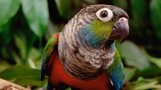 O que os incêndios na Amazônia significam para os animais silvestres