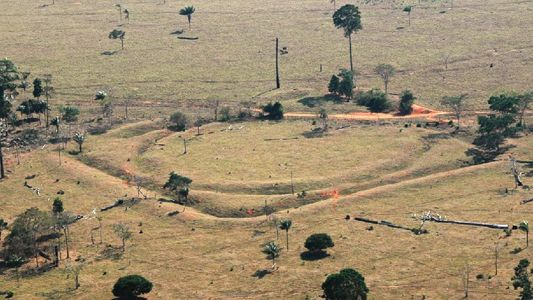 Floresta amazônica já abrigou milhões a mais do que se pensava