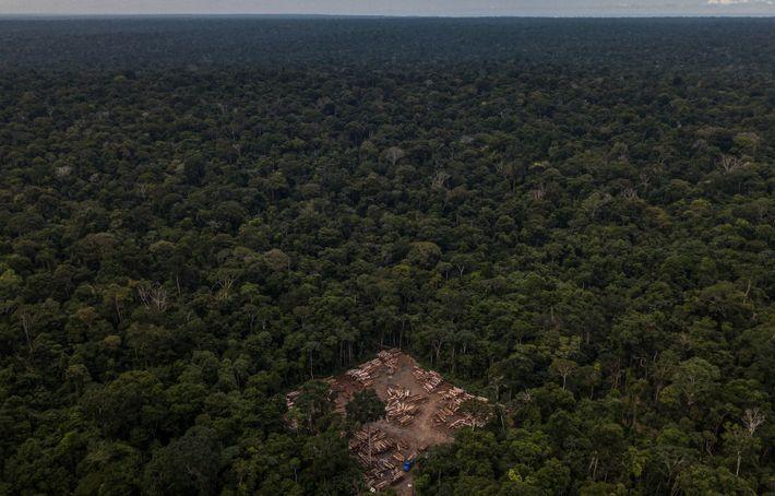 Uma clareira no baixo Tapajós, no Pará, serve para guardar madeira apreendida por agentes do Ibama. ...