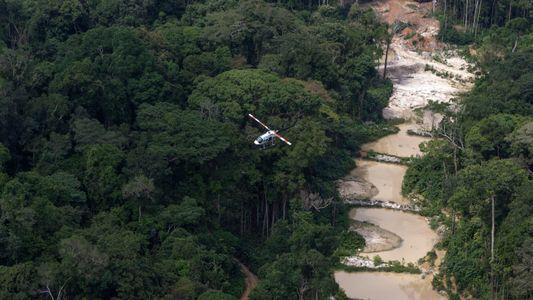 Ação humana é responsável por quase todas as transformações nos biomas brasileiros, diz Tasso Azevedo