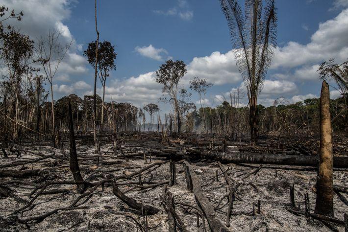amazonia-queimadas-e-desmatamento