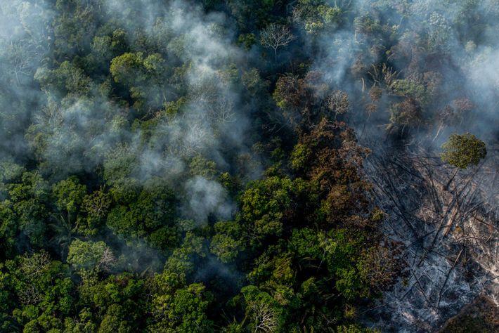 floresta amazonica queima
