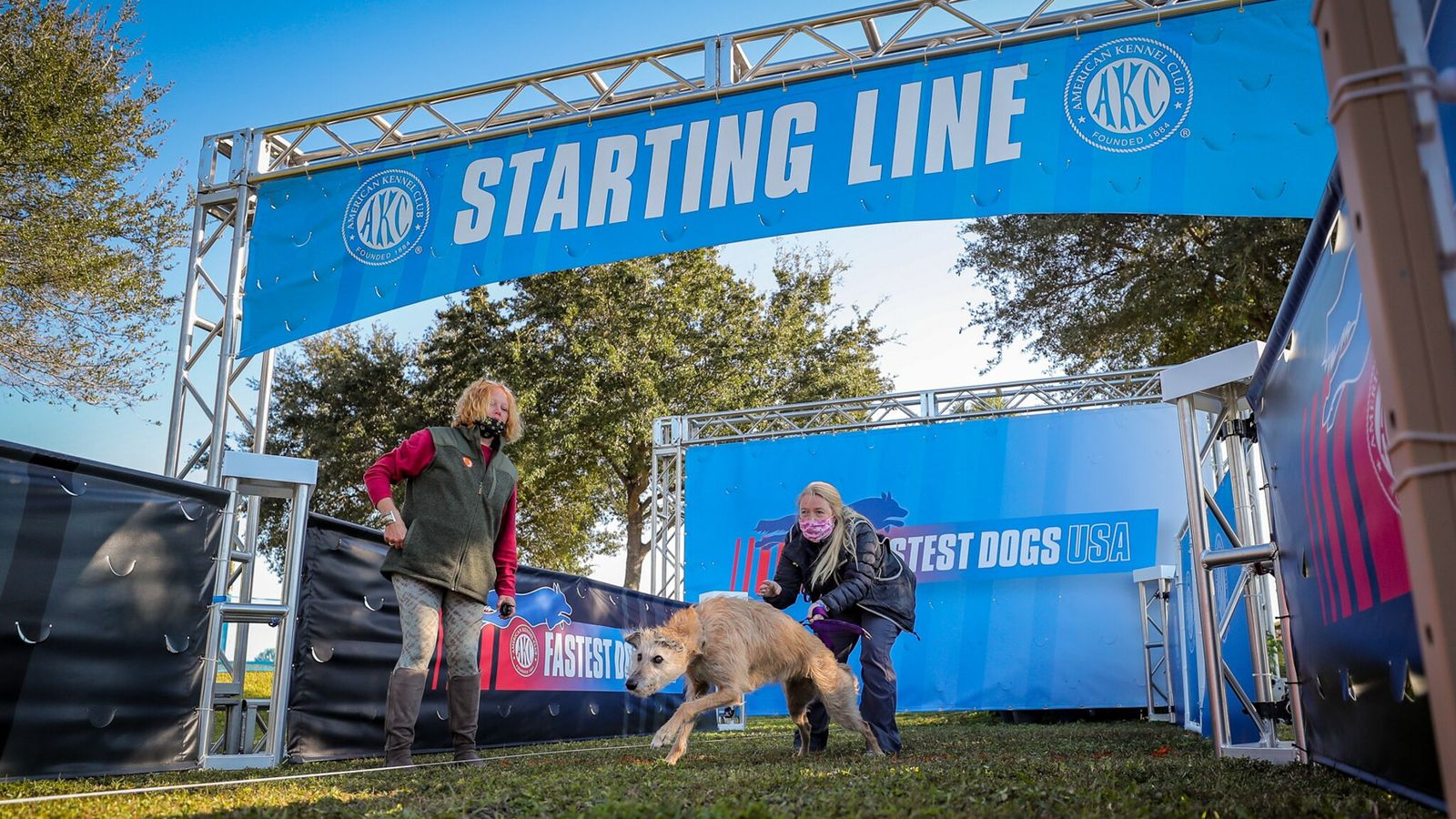 Phelan, um vira-lato resgatado em abrigo que ganhou a competição inaugural de cachorro mais veloz do American ...