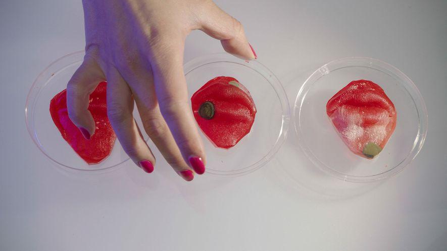 Os autorretratos microbianos de Liu são cultivados em um ágar, uma substância de aspecto gelatinoso, moldado ...
