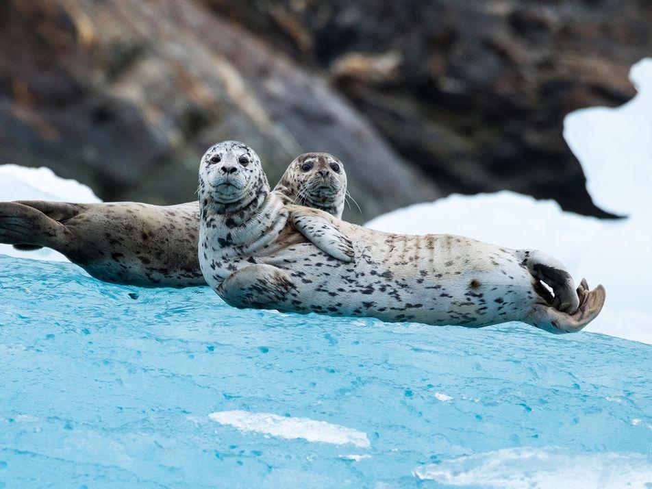 De focas a escaravelhos, esses animais se orientam pelas estrelas