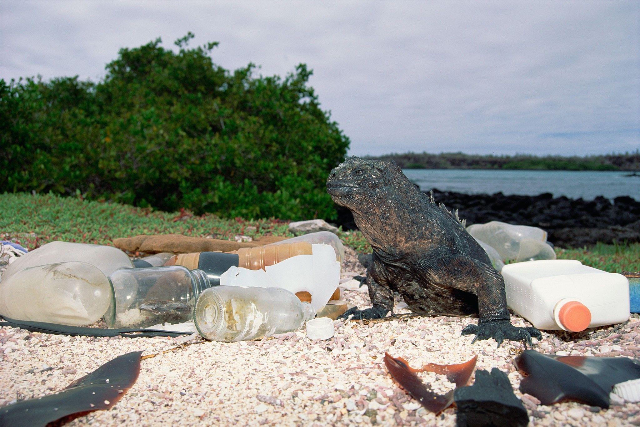 Imagens revelam animais sobrevivendo em um mundo de plástico