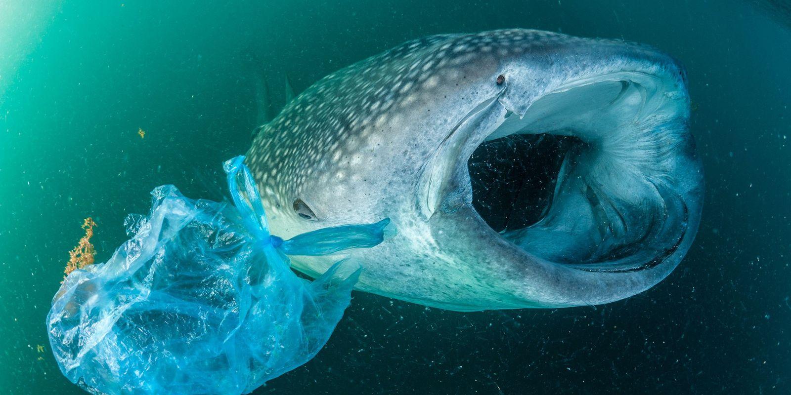 Veja como animais são impactados por um mundo repleto de lixo plástico